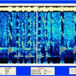 TASS Spectrum of Whales-2